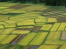 农林22条是台湾农业转型契机,蔡当局何乐不为?